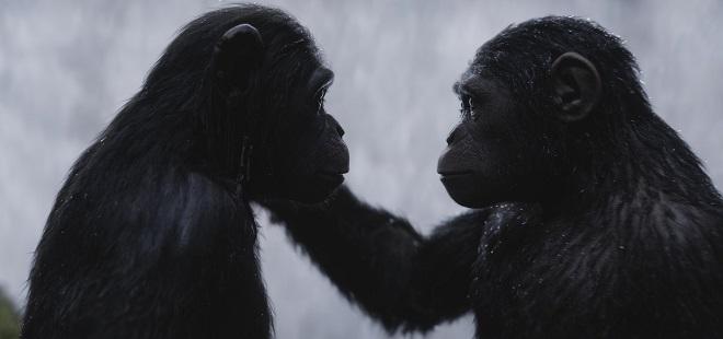 Planet der Affen Survival mit einigen Affen, unter anderem Andy Serkis